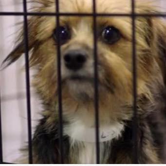 Help End Puppy Mills!